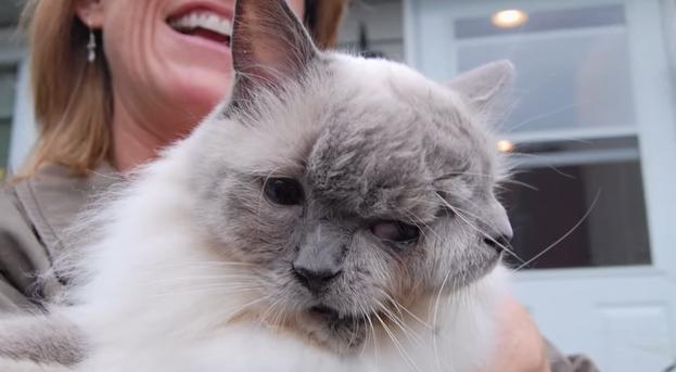 Dünyanın En Uzun Yaşayan Janus Kedileri