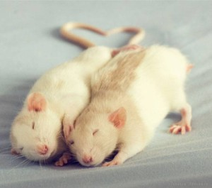 Rats-tails-heart-JF