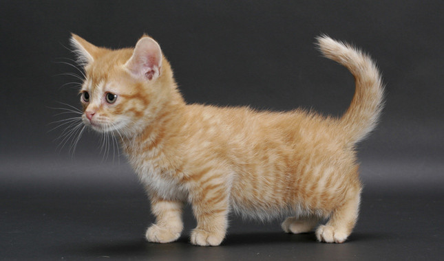 Two Legged Cat For Adoption