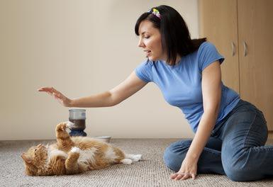 Kediniz ile oynayın!