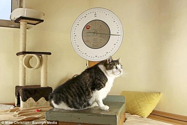Dünyanın en şişman kedisi
