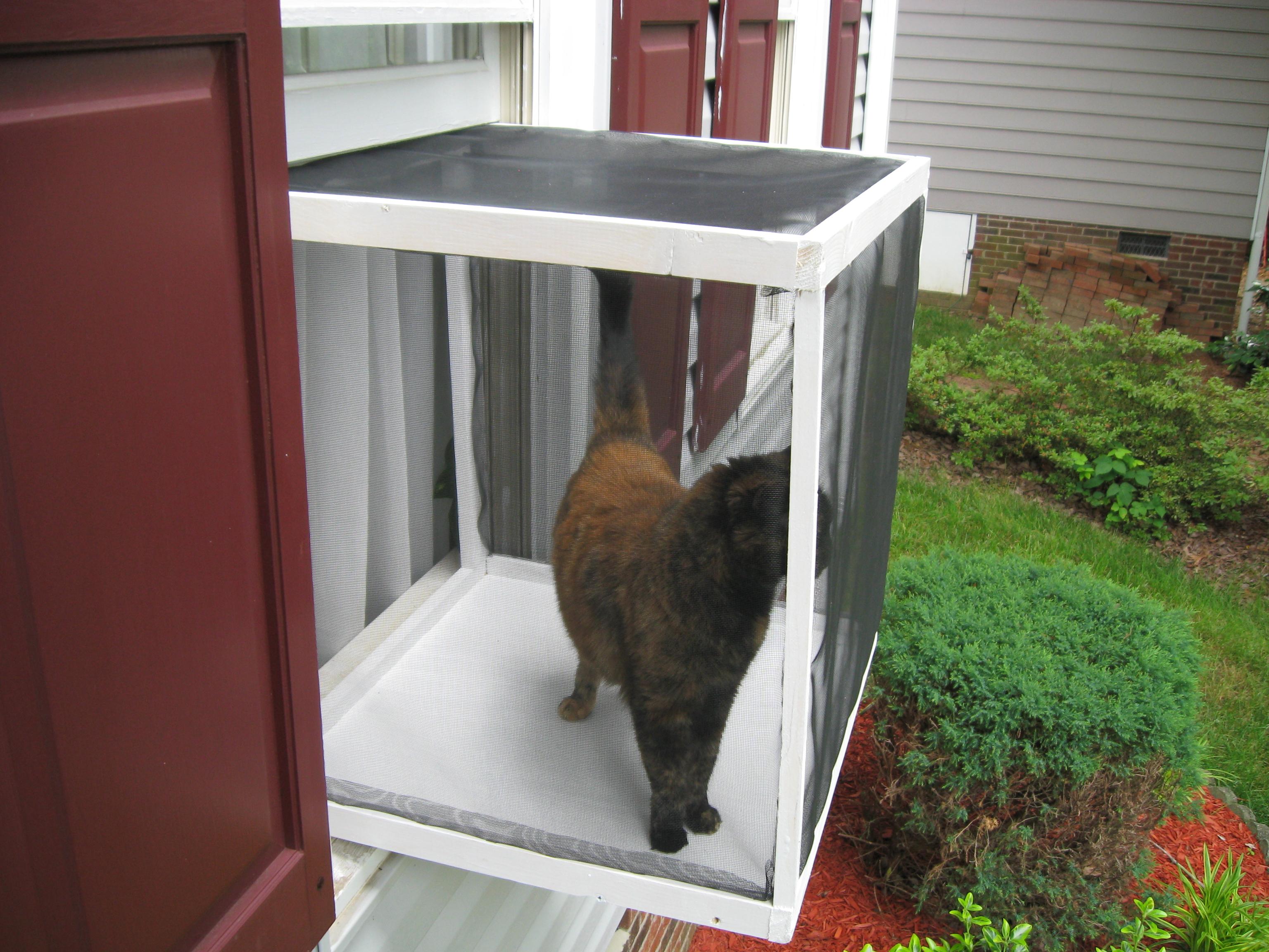 kedi için pencere güvenliği