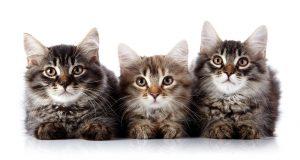 Evi daha çok süpürmek de kedi tüylerine karşı etkili bir önlem.