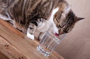 Susuzluk kedilerin tüy dökmesine yol açabiliyor!