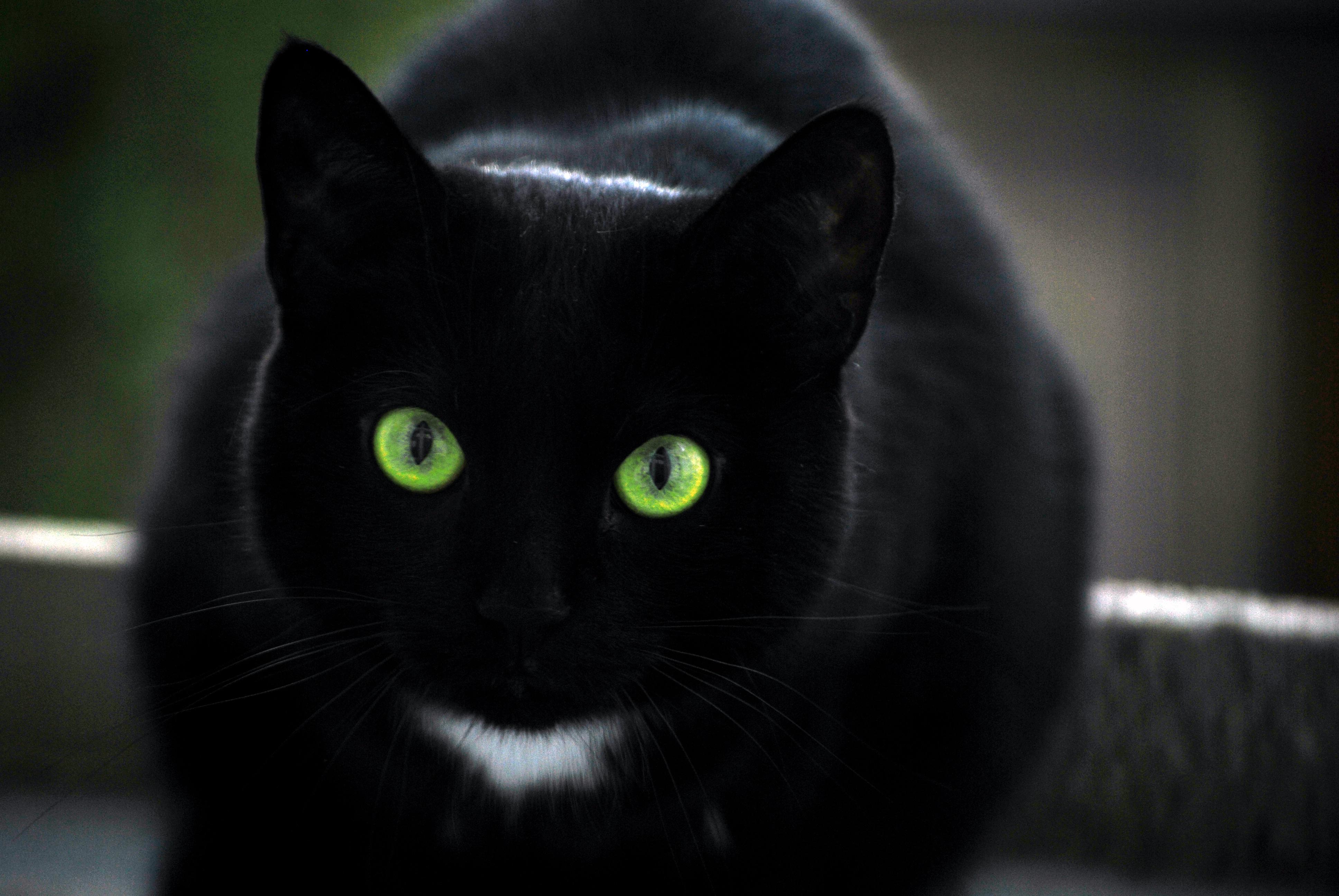 Siyak kedi uğursuzdur söylencesi de burada ortaya çıkıyor.