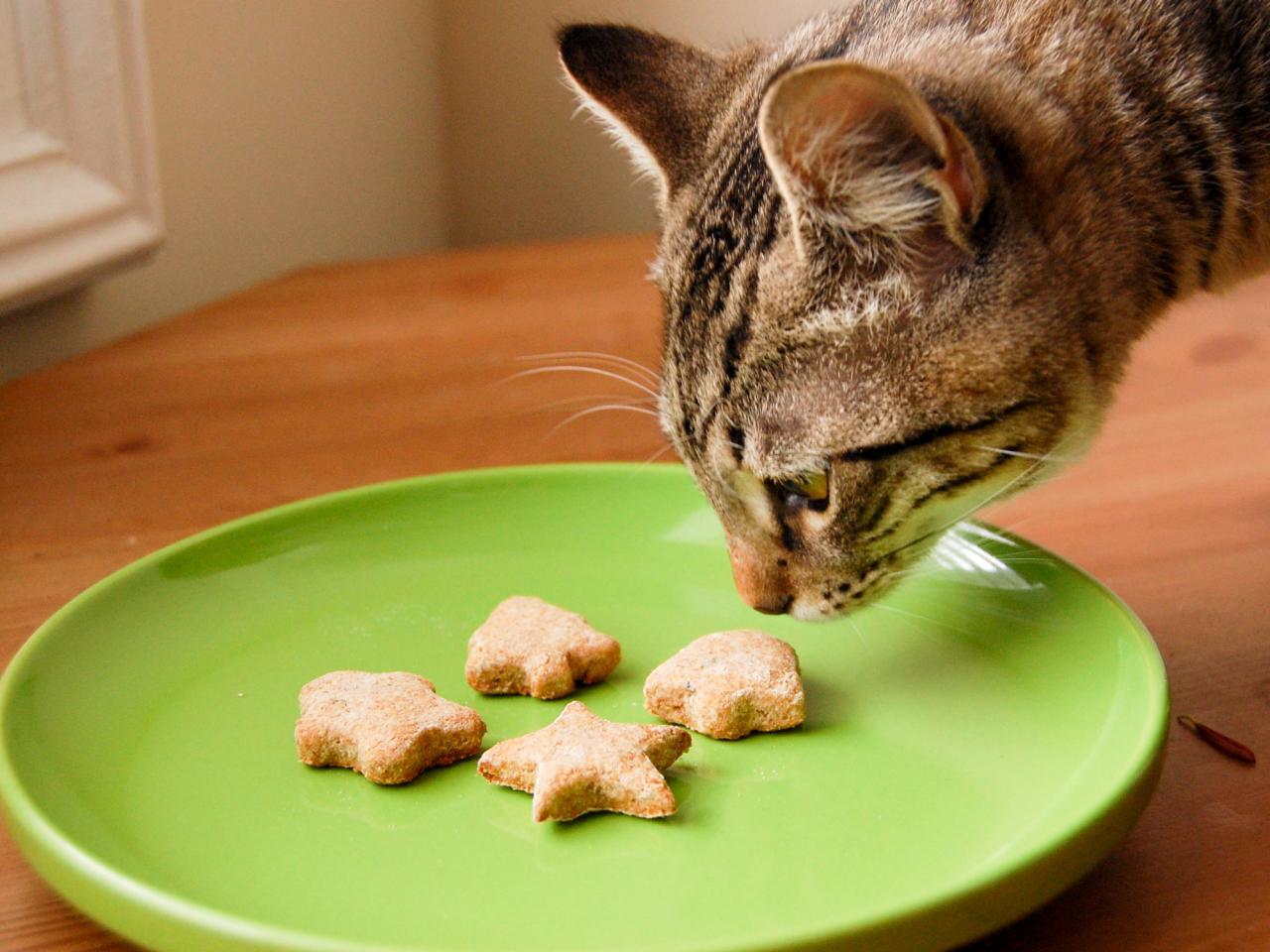 kedi ve kurabiyeler