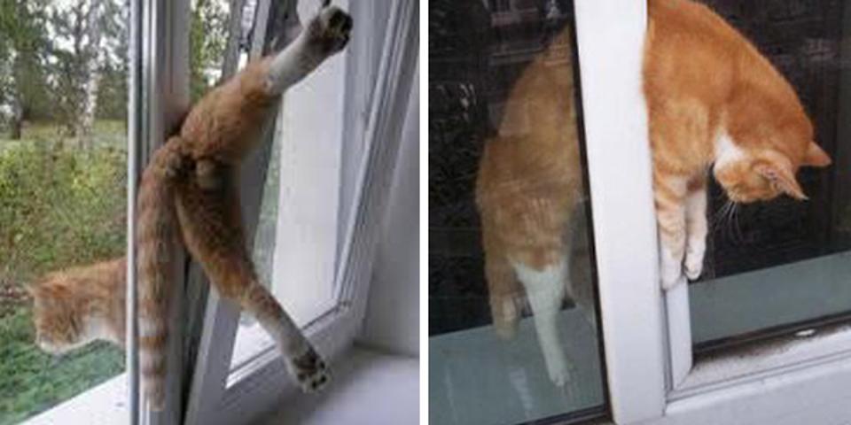 pencerede sıkışmış kedi