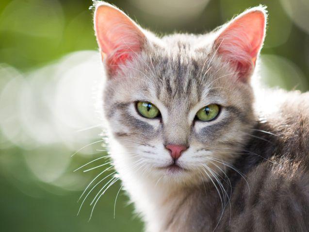 Kedinizi Yaşlılık Döneminde Rahat Ettirmenin 5 Yolu