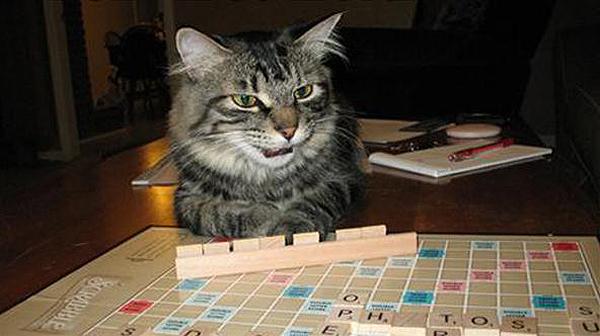 scrabble oynayan kedi