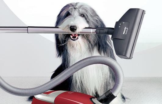 Köpeğiniz kadar evinizi temizlemeniz de önemli!