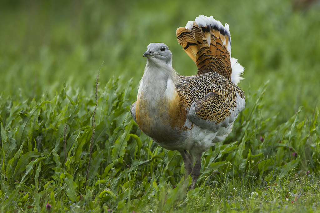Türkiye'nin En Büyük Kuşu