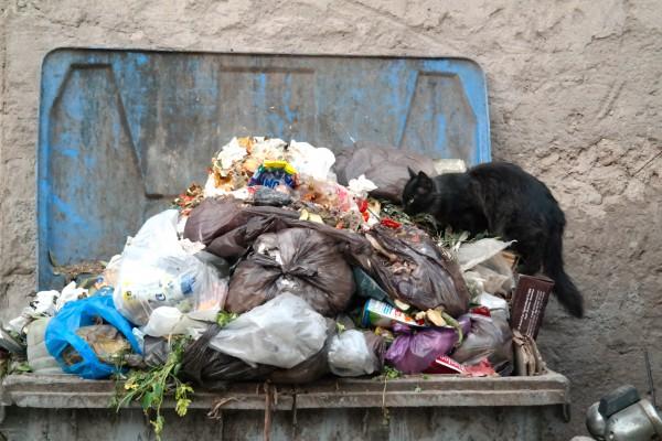 Bozuk yiyecekler de kedilerin zehirlenmesine yol açıyor.