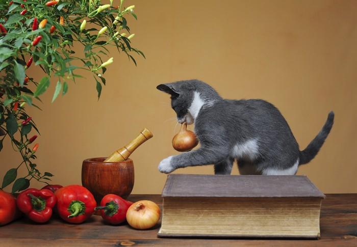 Soğan ve sarımsak kedilerin sağlıklarını tehdit ediyor!