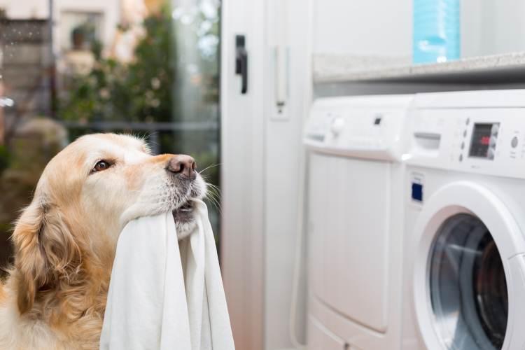 Evdeki örtüleri ve köpeğin eşyalarını yıkayın!