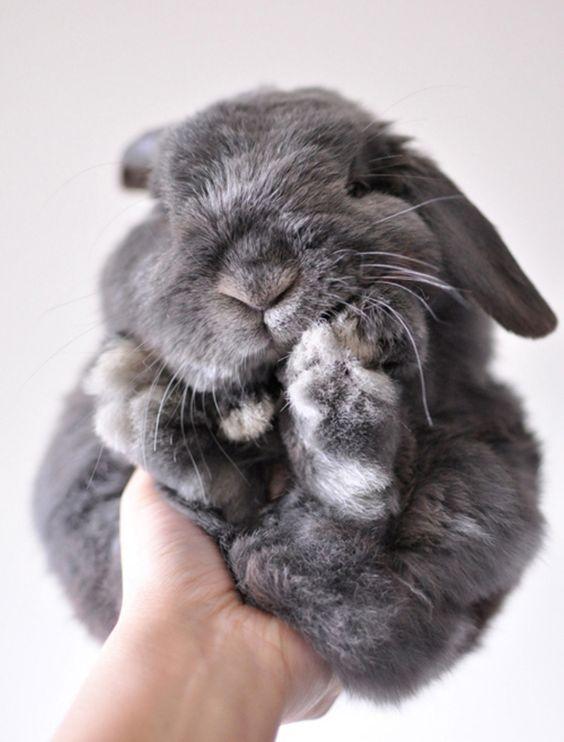 Türkiye'de nesli tükenen bu tavşanlar bir Almancı sayesinde yeniden yetiştirilmiş.