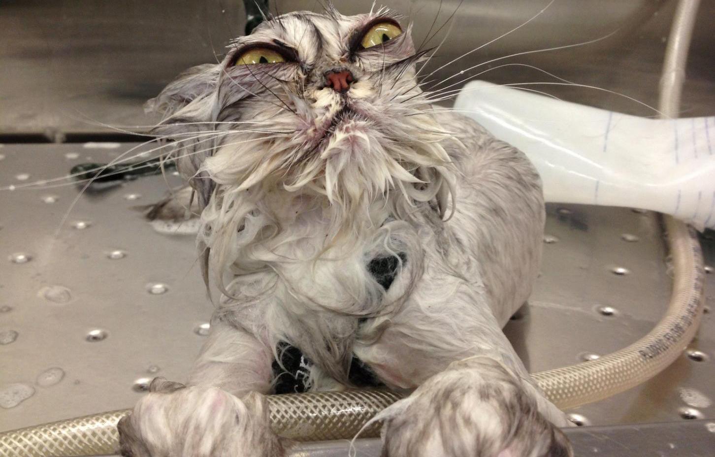 Kediler yıkanmaz!