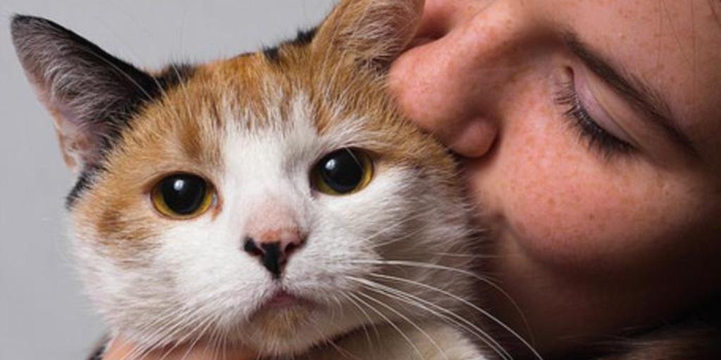 Kedileri zorla sevmeyiniz!