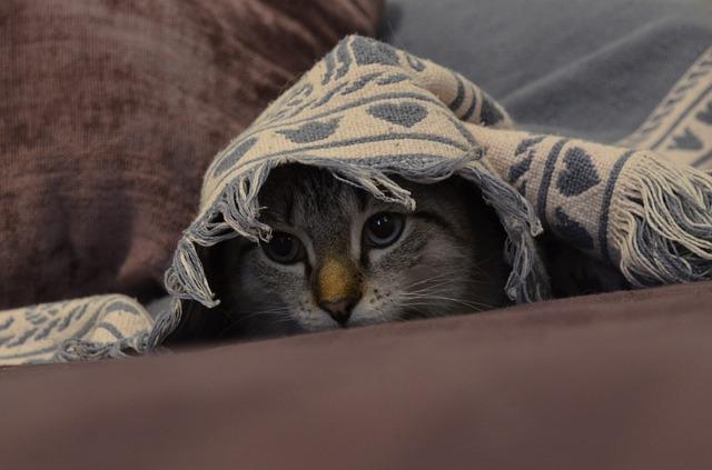 Kediler kargaşadan ve yüksek sesten nefret ederler!