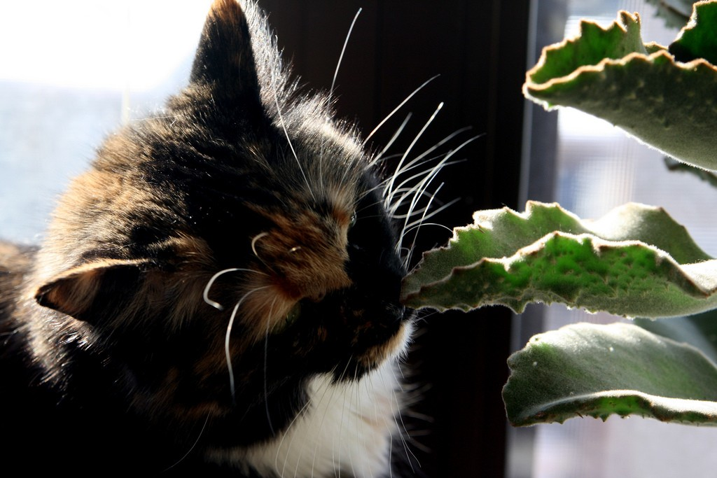 cat-eating-plant