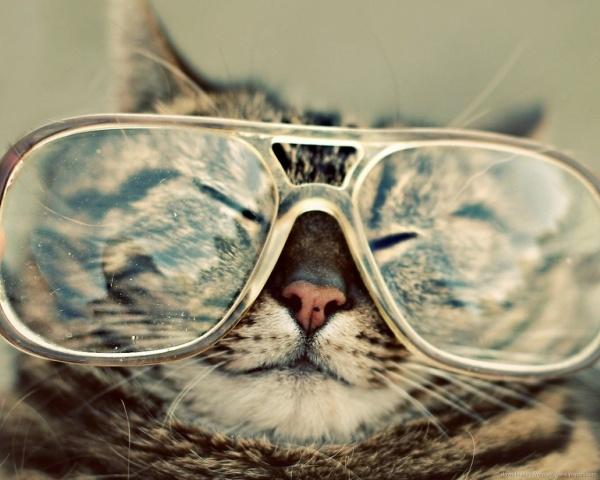 Yaşlı kediler görme kaybı yaşayabilir.