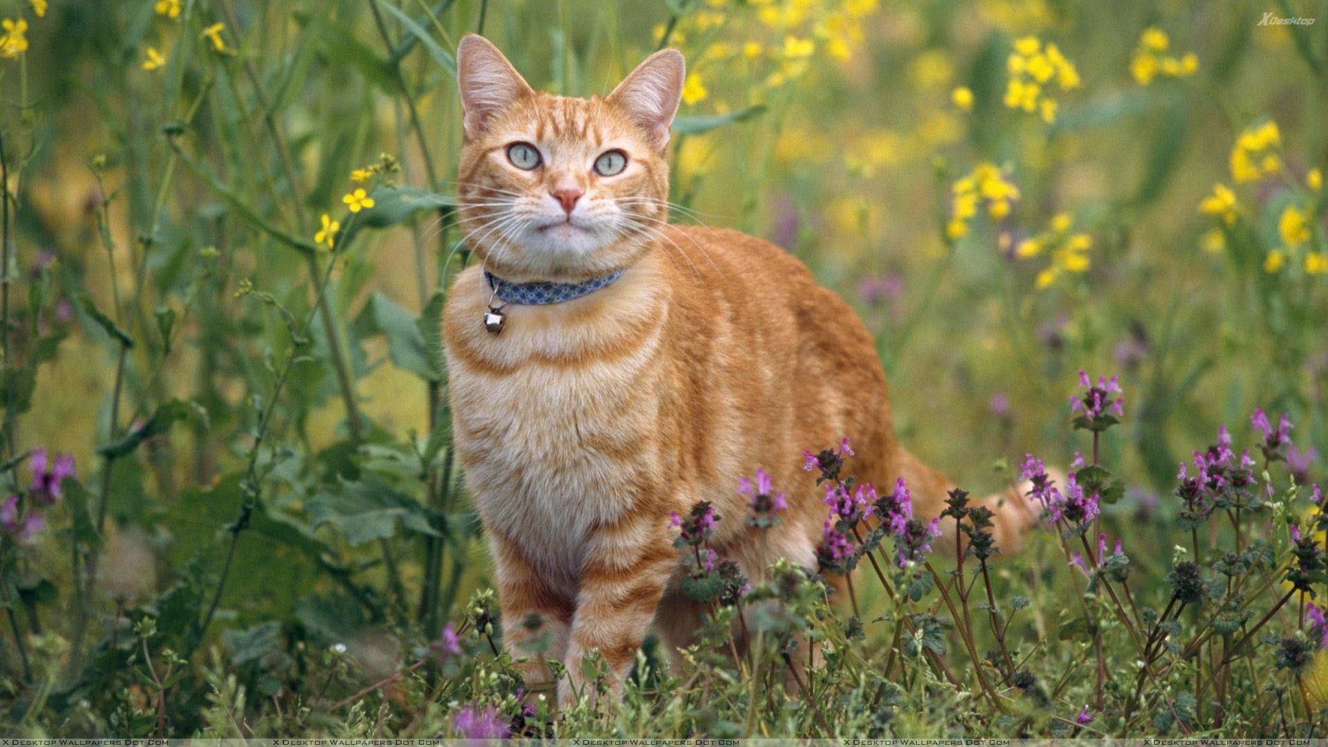 cat-in-garden-big