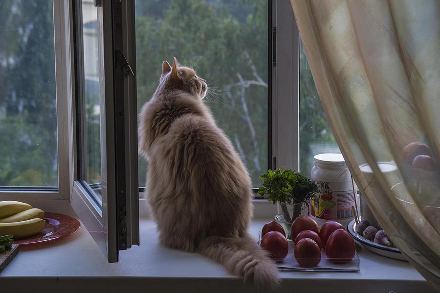 cat-on-the-kitchen-window-vladimir-kholostykh