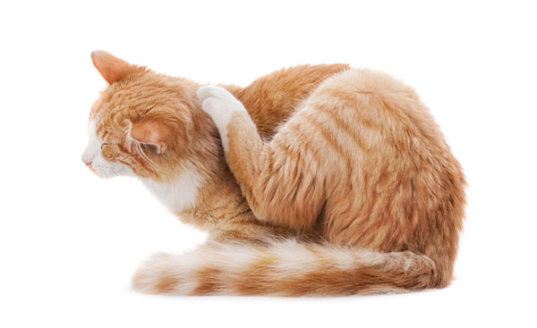 catScratching