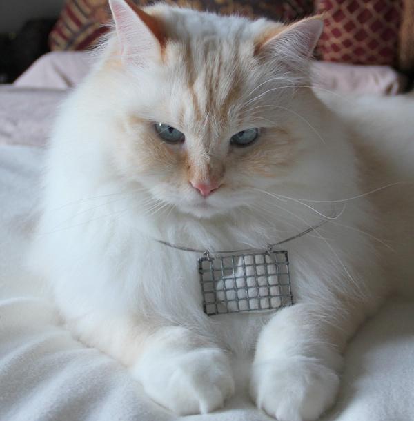 Yaratıcılığınızı kullanın ve kedinizin tüylerinden takılar yapın!