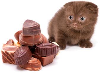 Çikolata da kediler için zehirleyici etkiye sahip!