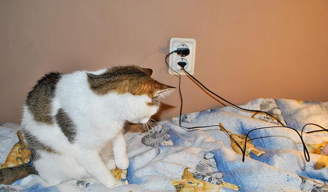 kedi ve elektrik kabloları