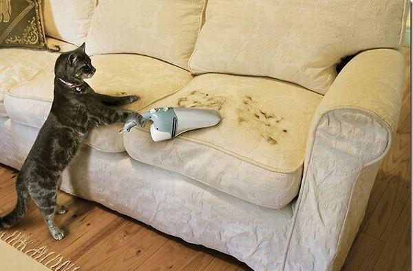 temizlik yapan kedi