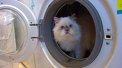 çamaşır makinesinde kedi