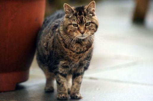 yaşlı kedi