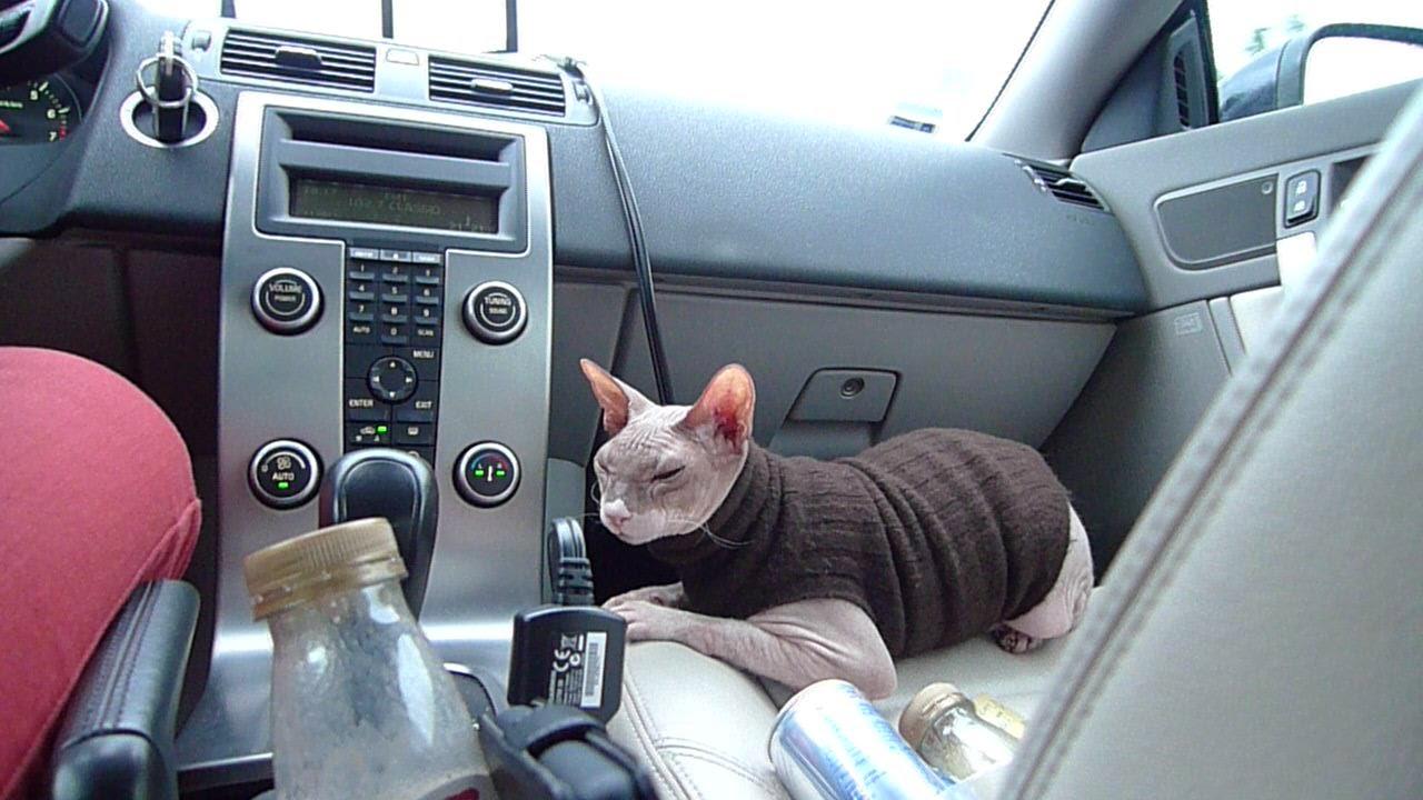 Sıcak havalarda kedileri küçük alanlarda kapalı bırakmamak gerekiyor!