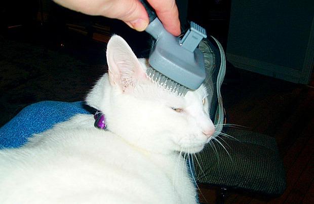 kedi tarama