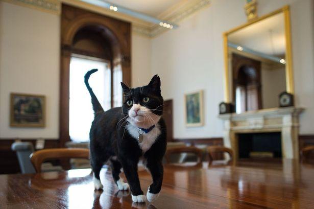 Palmerston (3)