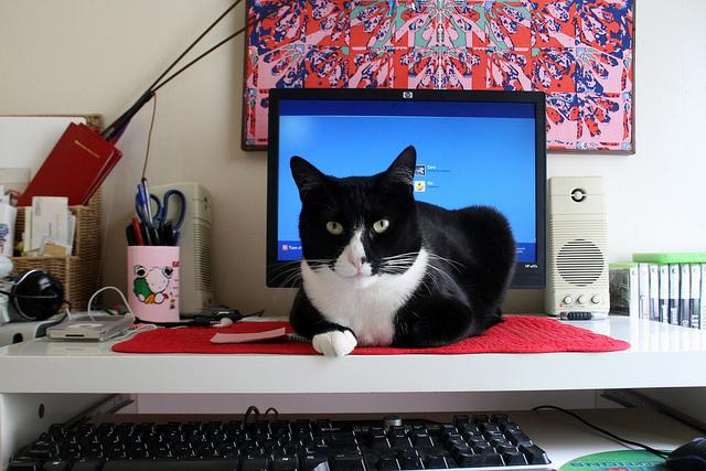 bilgisayarın üstünde yatan kedi