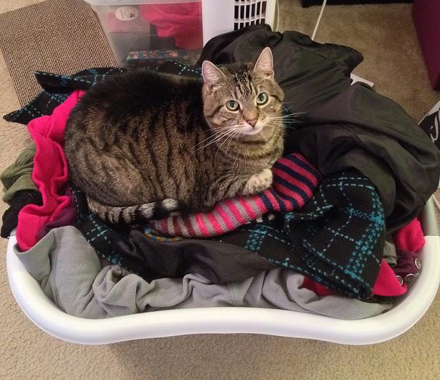 giysilerin üstünde yatan kedi