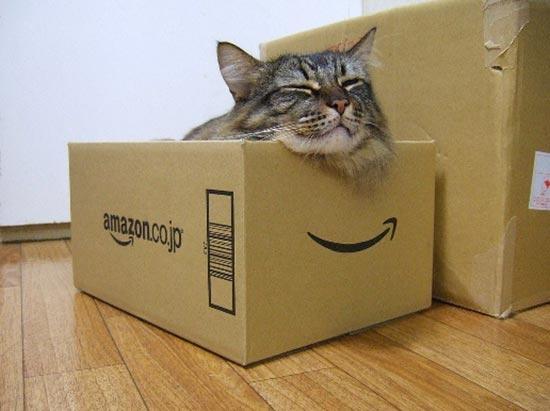 kutunun içindeki kedi