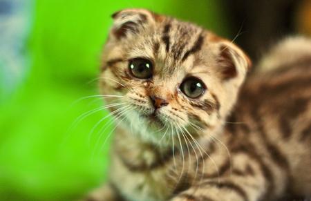 üzgün kedi