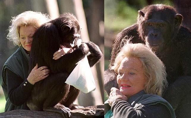 şempanze kalu