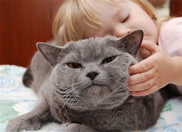Cat_purr_2