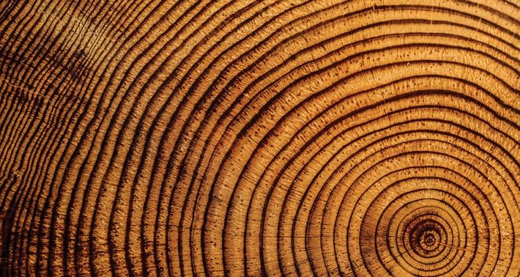 Bir Ağaç Kesitini Plak Gibi Dinleyince Ortaya Çıkan İnanılmaz Müzik