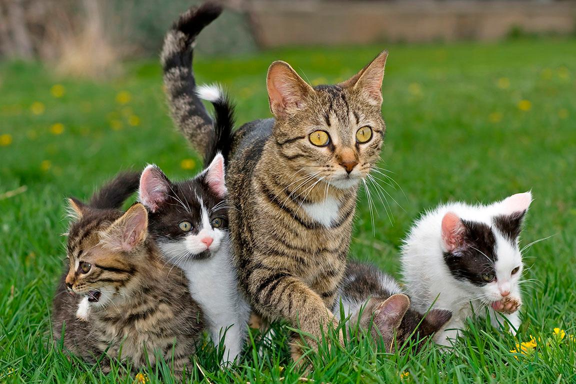 anne kedi ve yavruları