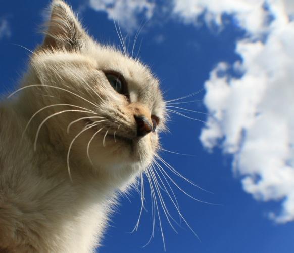 bıyıkları kesilen kedi yürüyemez mi