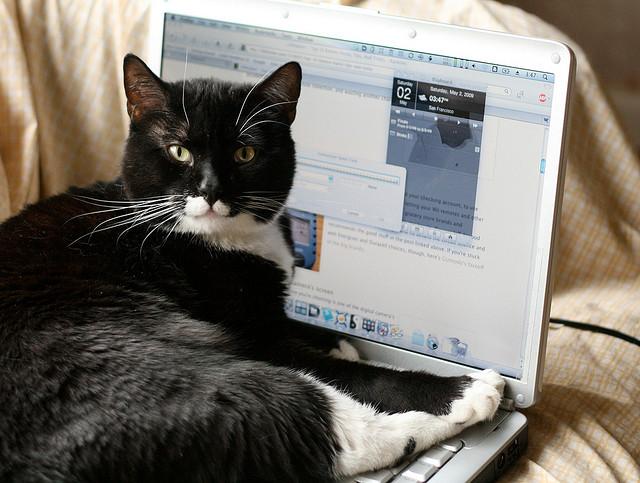 bilgisayarın önüne yatmış kedi