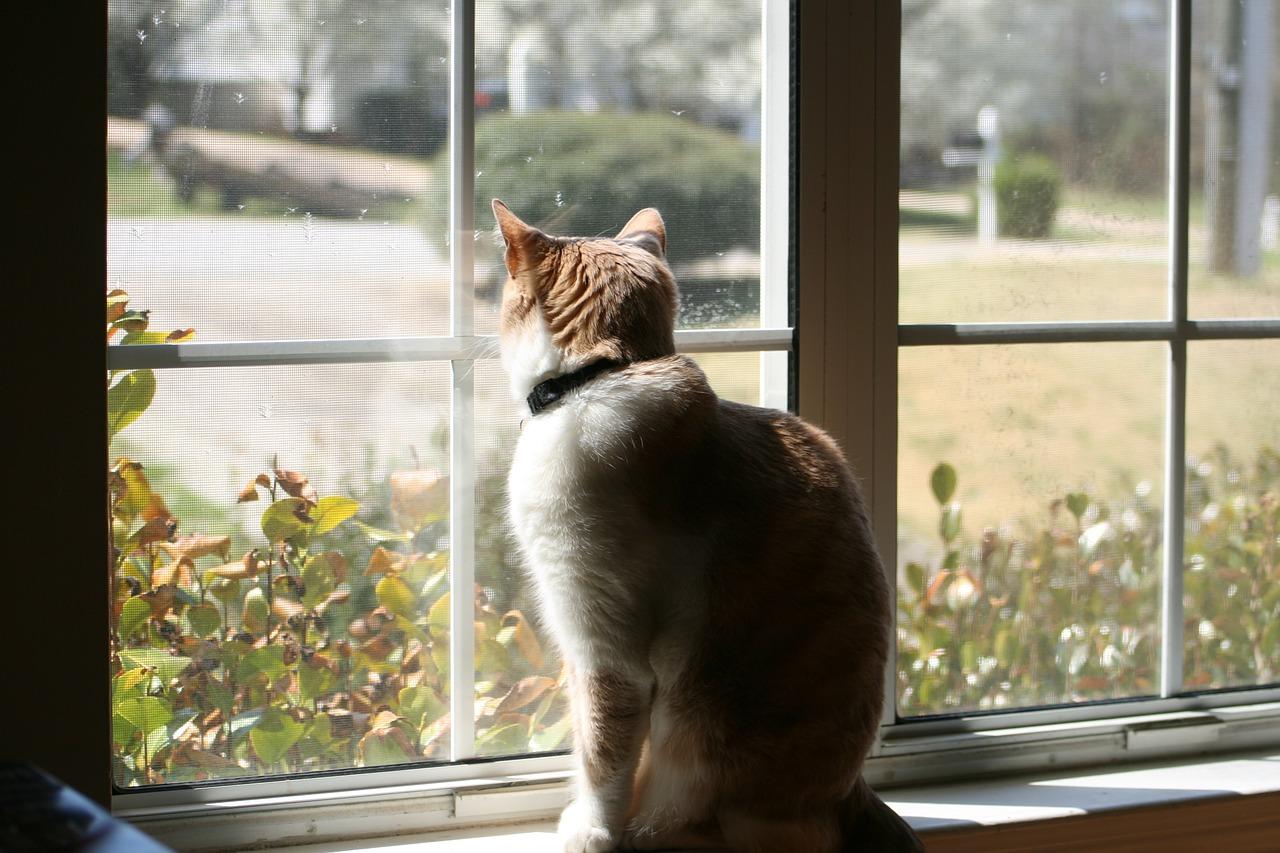 camdan bakan kedi