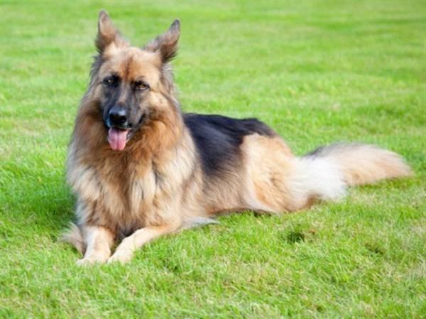 dünyanın en zengin köpeği