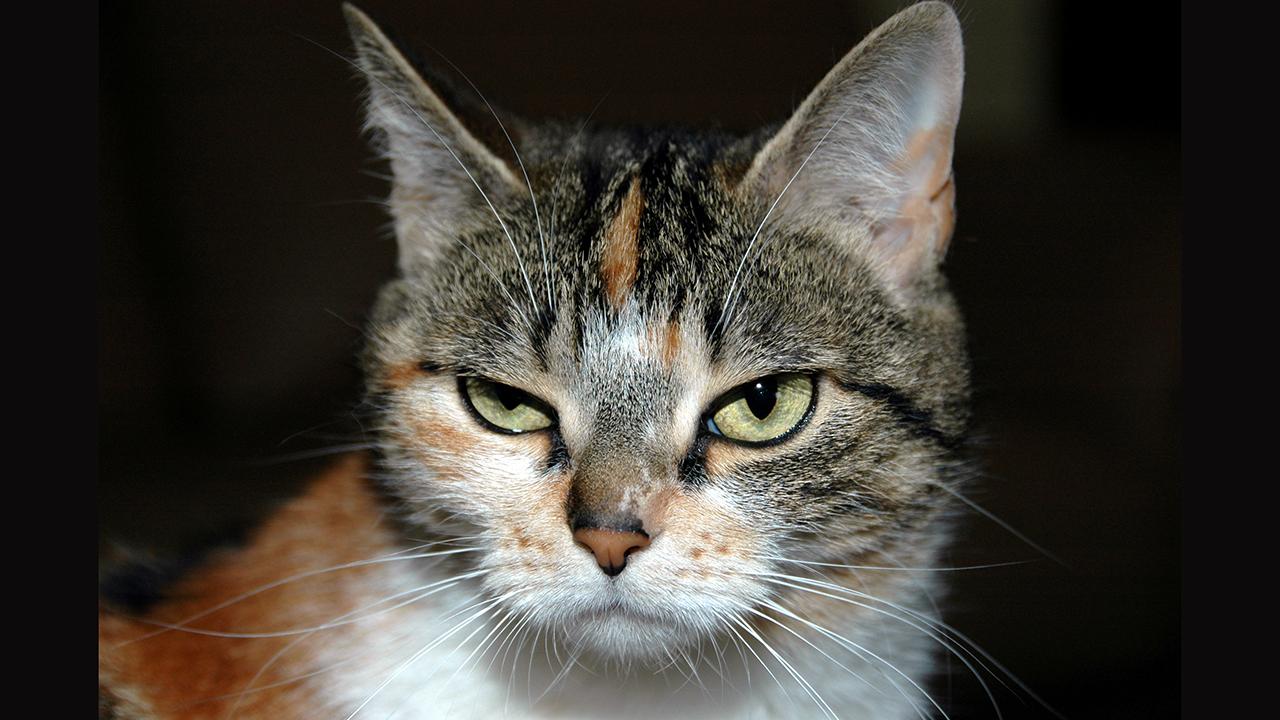 Türkiye'de 15 Milyon Kişi Evini Kedilerle Paylaşıyor 5
