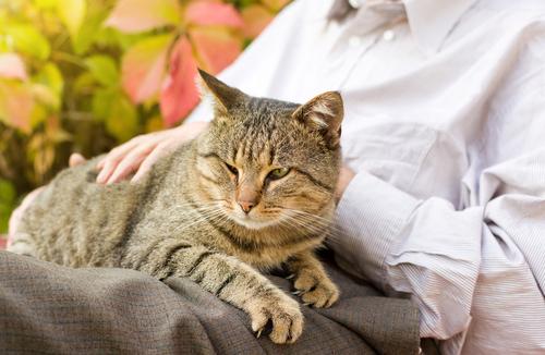 kadının kucağında oturan kedi